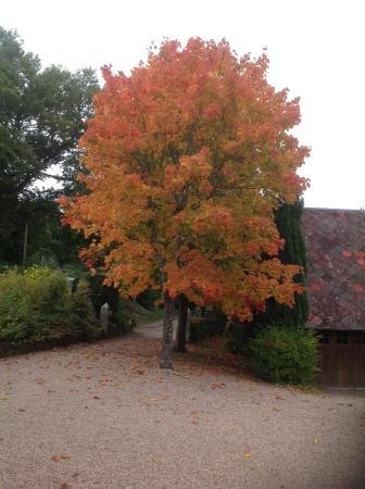 Cordebugle, France : Shades of Autumn