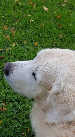 Cordebugle, France : Taram, Mr and Mrs Fleury's gorgeous dog