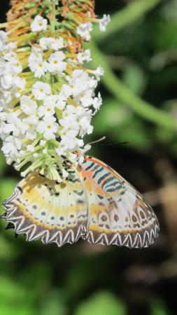Butterfly wonderland discount coupons