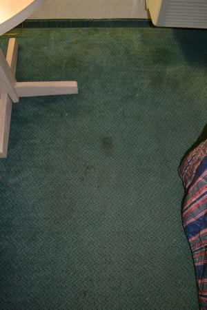 Super 8 by Wyndham Canandaigua: typical carpet stains - more throughout room