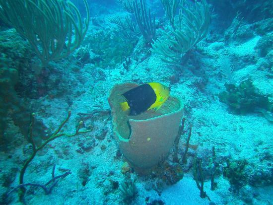 Симпсон-Бей, Сен-Мартен – Синт-Мартен: Beautiful colored fish in a basket!