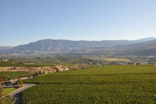 Hester Creek Estate Winery Villa : View