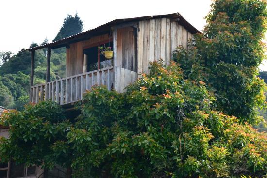 Hosteria Las Orquideas - Runtun Restaurant: casa arbol habitacion