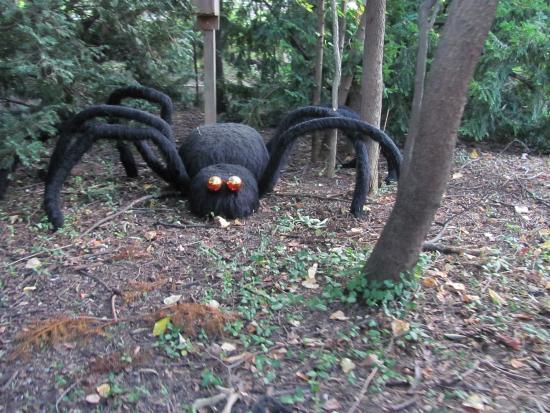 Halloween Decorations On The Train Ride Cincinnati Zoo Botanical Garden Tripadvisor
