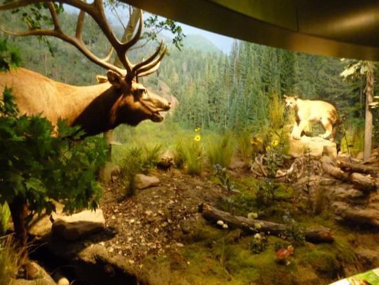 Natural History Museum Day Pass Of Utah
