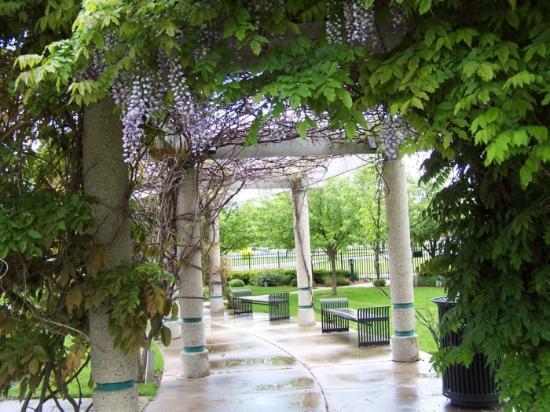 Andersen Enrichment Center: Wisteria WOnder - After The Rains