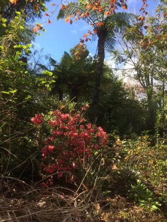 Waitati Gardens