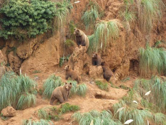 Osos pardos: fotografía de Parque de la Naturaleza de Cabárceno, Obregón - Tr...