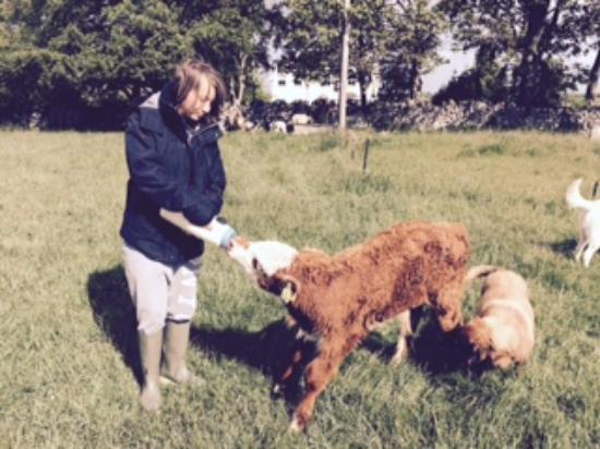Rigney's Farmhouse Bed & Breakfast: Rigney's farm
