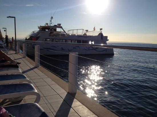 Cala Vinyes, España: Boat trip to Palma from poolside