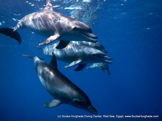 scuba-hurghada-diving.jpg