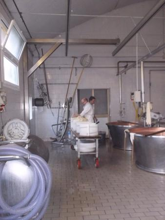 Golosaitalia Day Tours: Cheese Factory on Golosaitalia Day Tour