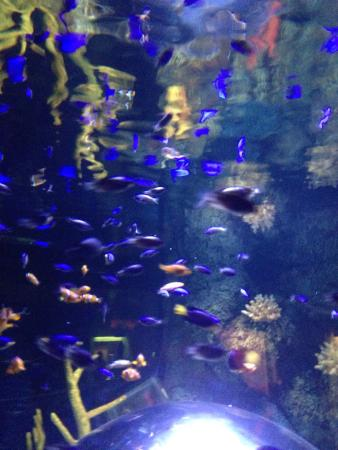 photo1.jpg - Photo de St Andrews Aquarium, St. Andrews - TripAdvisor