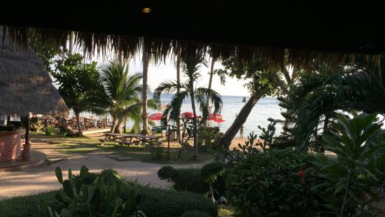 Palm Leaf Resort: vista dal bungalow