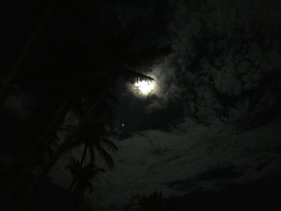 Palm Leaf Resort: full moon