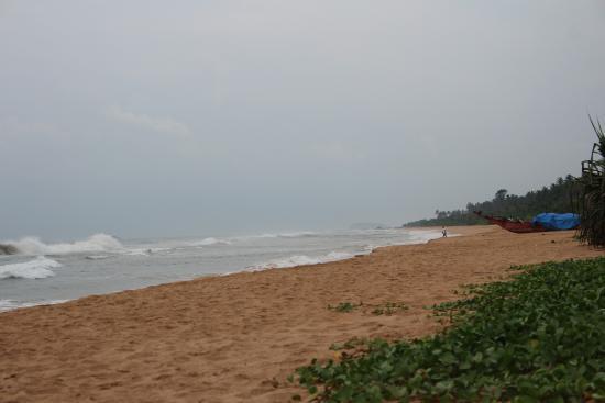 Bentota, Sri Lanka: Черепаховая ферма в Бентоте на краю бухты