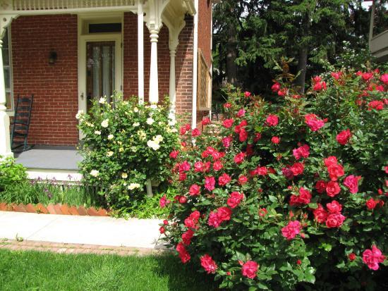 Brickhouse Inn Bed & Breakfast: Roses in the garden
