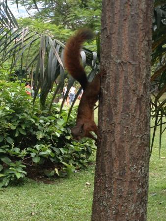 animales del jardin fotograf a de jardin botanico de