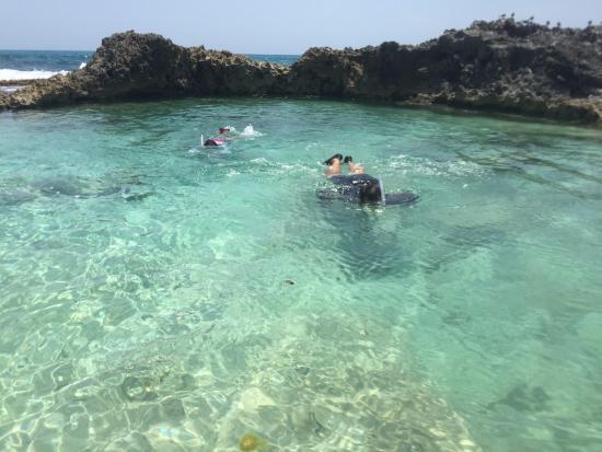 Piscina del rey part of mia reef hotel attractions for Piscina arganda del rey