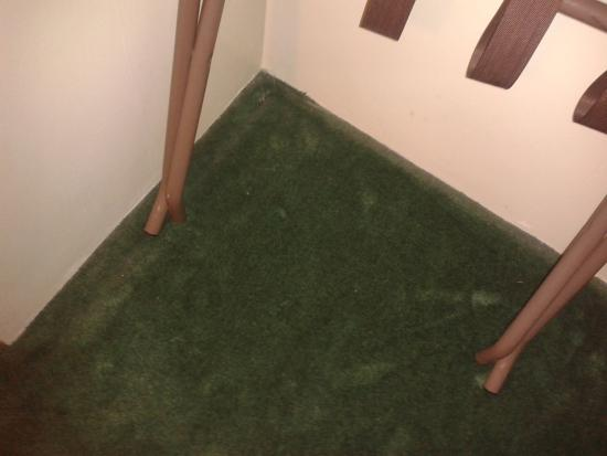 ShoreWay Acres Inn & Cape Cod Lodging : dirty carpet in clothes hanging area