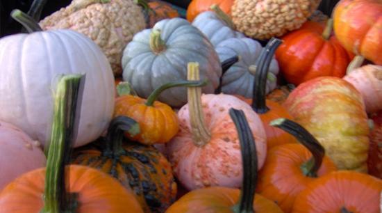 Burton, Οχάιο: Pumpkins Galore!