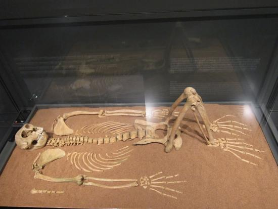 Llivia, Španělsko: Squelette de singe dressé appartenant jadis à un dignitaire.