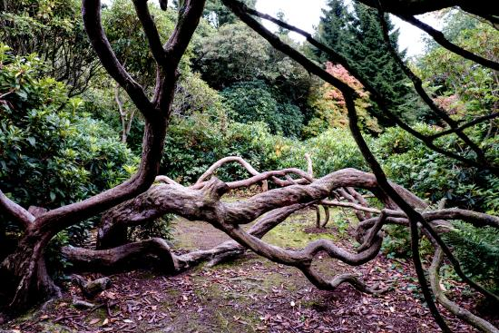 Biddulph, UK: One of the less common views in the Gardens