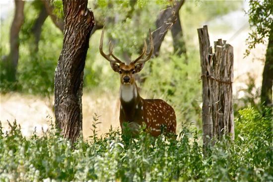 Kerrville, TX: Exotic Wildlife