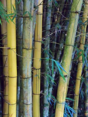 Xandari Resort & Spa: Beginning of the bamboo forest