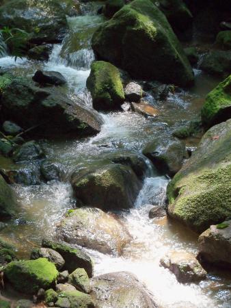 Alajuela, Costa Rica: sight on the way to waterfall