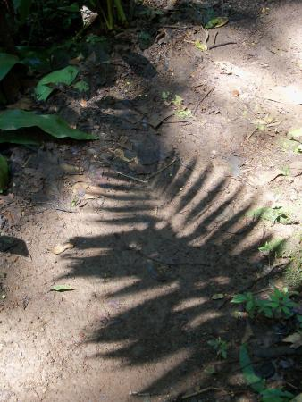 Alajuela, Costa Rica: palm shadow on the trail