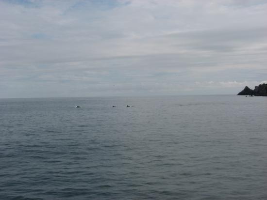 Kenai Fjords National Park: Orcas