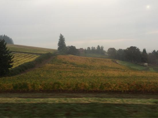 Domaine Drouhin Oregon: photo1.jpg