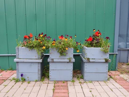 Flowers outside building , Picture of Serendipity Gardens