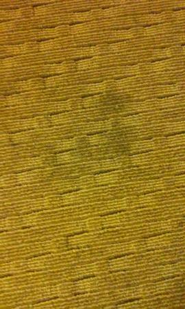 Avenue Hotel: Stained carpet