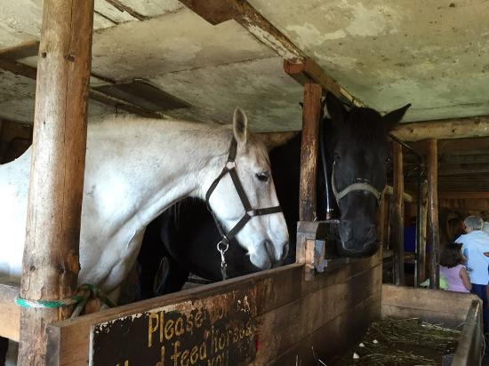 Mockingbird Hill Farm: horses in barn