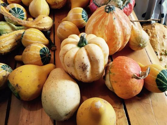 Mockingbird Hill Farm: in church -gourds
