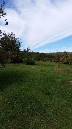 Pochuck Valley Farms: View of the apple orchards
