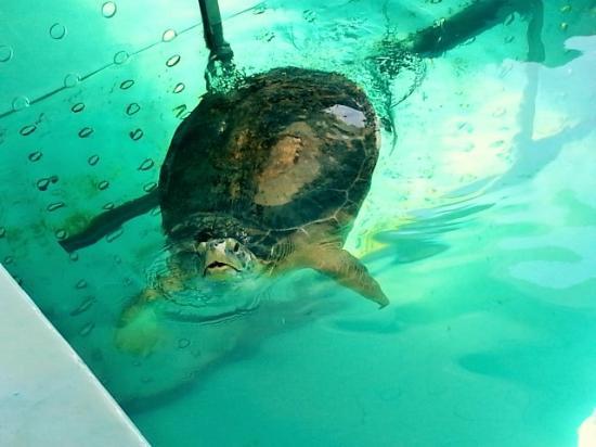Turtle Picture Of Clearwater Marine Aquarium Clearwater Tripadvisor