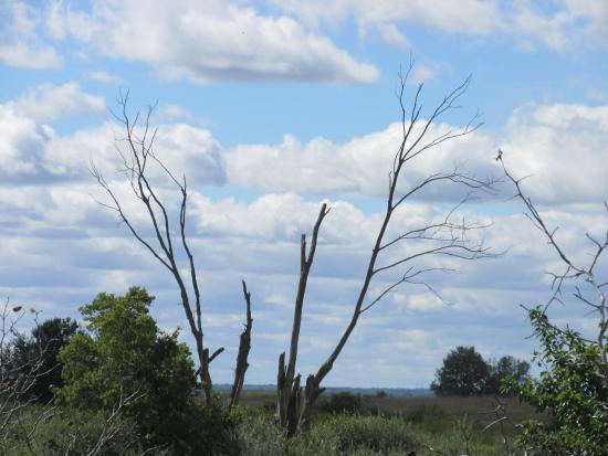วิลมิงตัน, อิลลินอยส์: The Tree