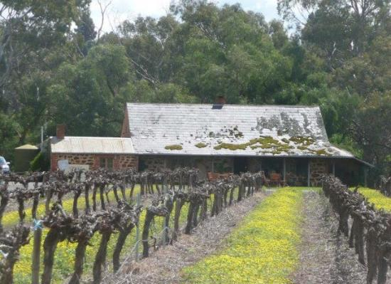 Rowland Flat, Australia: Jenke Vineyards