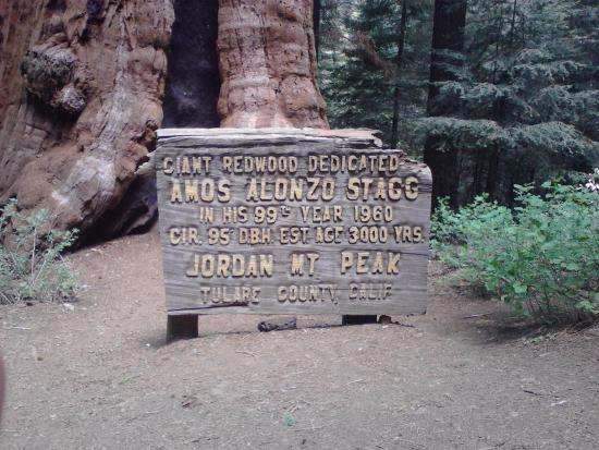 Springville, Californien: Visit the Alanzo Stagg Tree, the 6th largest Sequoia.