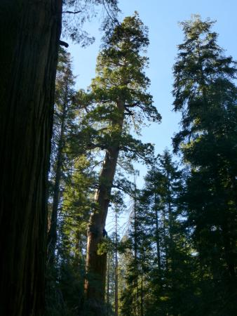 Springville, Californien: You can hike the canyon to Camp Nelson and walk through groves of redwoods.