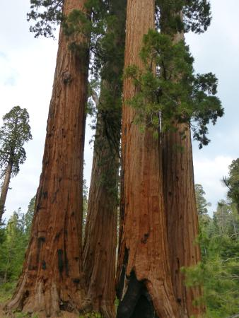 Springville, Californien: There are more redwood groves outside of the National Park in the National Monument.