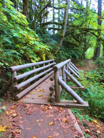 Scotts Mills, Oregón: Wood bridge on the Butte Creek Falls trail