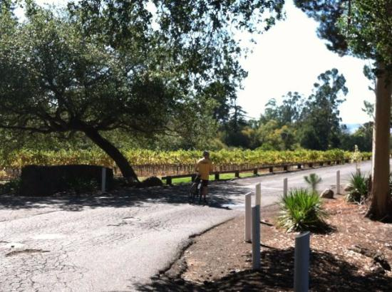 Sonoma Valley Bike Tours & Rentals : Backroads among vineyards