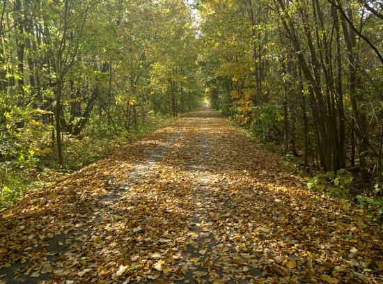 Richmond, MI: Fall colors