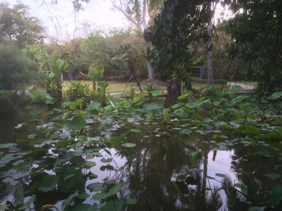 Jardin d 39 eden picture of jardin d 39 eden saint gilles les for Le jardin d eden