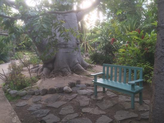 Jardin d 39 eden picture of jardin d 39 eden saint gilles les for Jardin d eden meyzieu