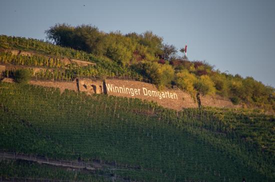 Hotel Moselblick: Zicht op de wijnberg vanuit de kamer